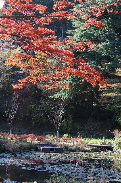 六甲山木の葉紅葉です 26.10.29