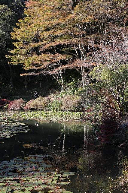 六甲植物園 紅葉始まり 26.10.29