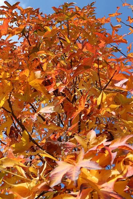 樹の下から空に向かって 26.11.27