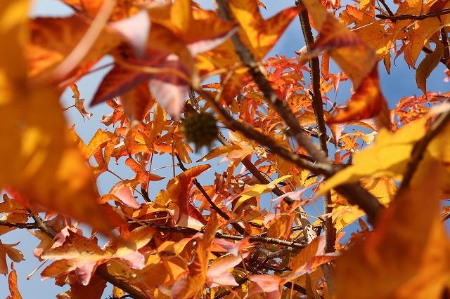 ピンボケの木の実 26.11.27