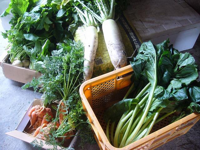 野菜いっぱい丸亀より横 26.11