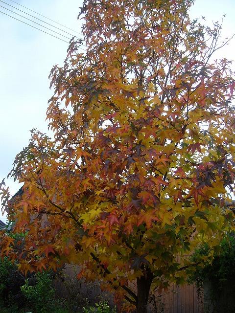 やさしい雨と紅葉 26.11.26