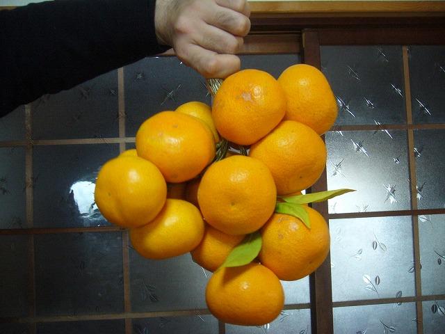 重過ぎる蜜柑  26.11.28