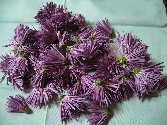 菊の花(食用) 26.12..4