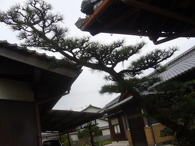 庭の剪定終り 26.12.