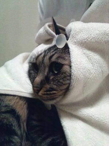 猫耳帽子3