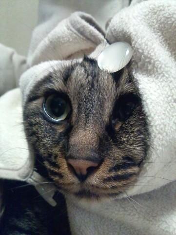 猫耳帽子2