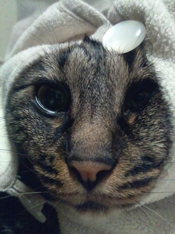 猫耳帽子1