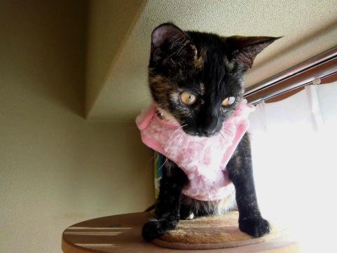 着る毛布4