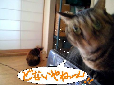 聞く耳12