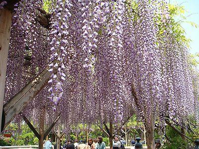 kameidofuji200705a_convert_20120430052756.jpg