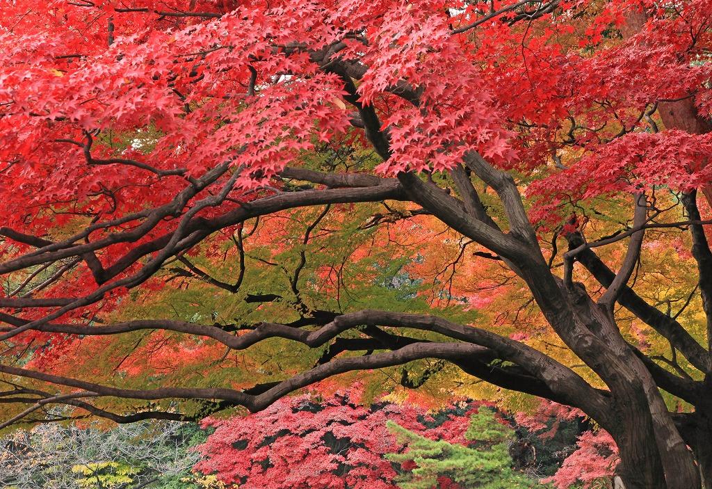 momijiyama_20121214160707.jpg