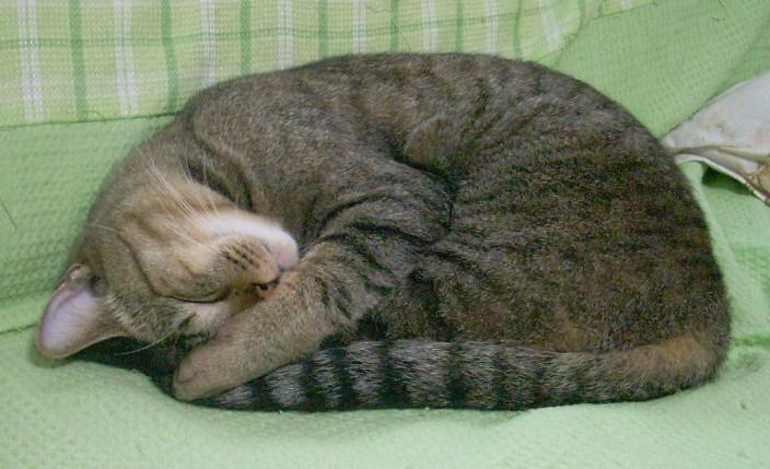 ねこ 陶枕3