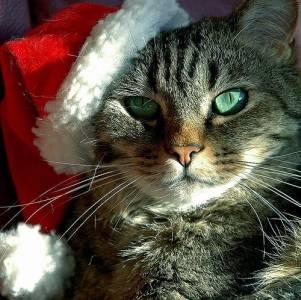 ねこ しごと クリスマス