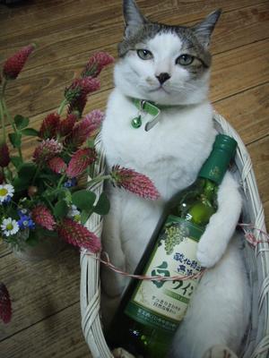 ねこ しごと ワインいかが