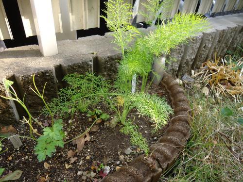 herb-garden1.jpg