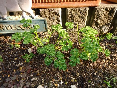herb-garden2.jpg