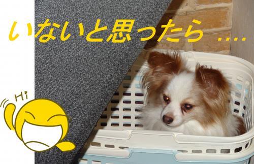 DSC00432_convert_20121021224949.jpg