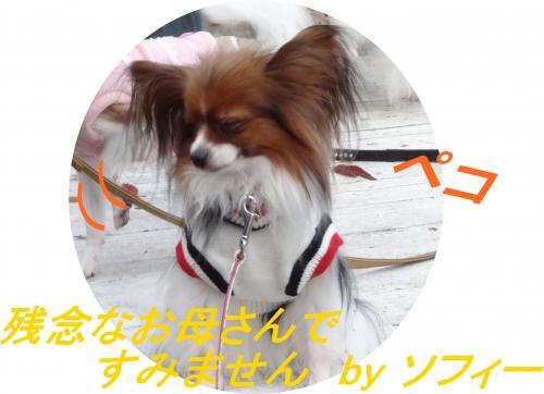 DSC00503_convert_20121130142649.jpg