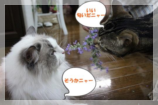 s-0604IMG_6678.jpg