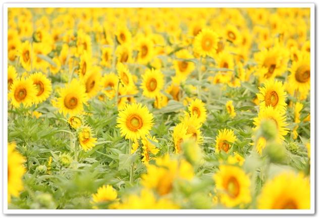 2012_07_29_0043-1.jpg