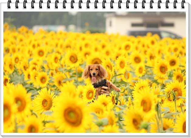 2012_07_29_0087-1.jpg