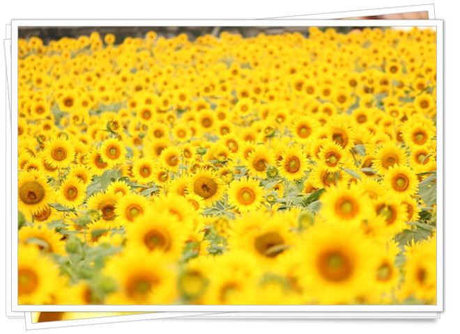 2012_07_29_0098-1.jpg