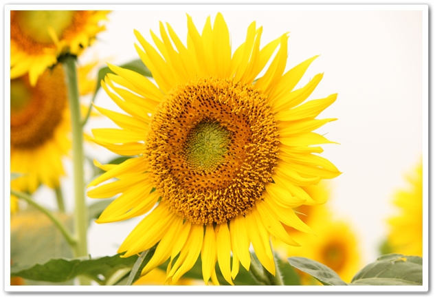 2012_07_29_0108-1.jpg