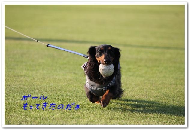 2012_08_26_1208-1.jpg