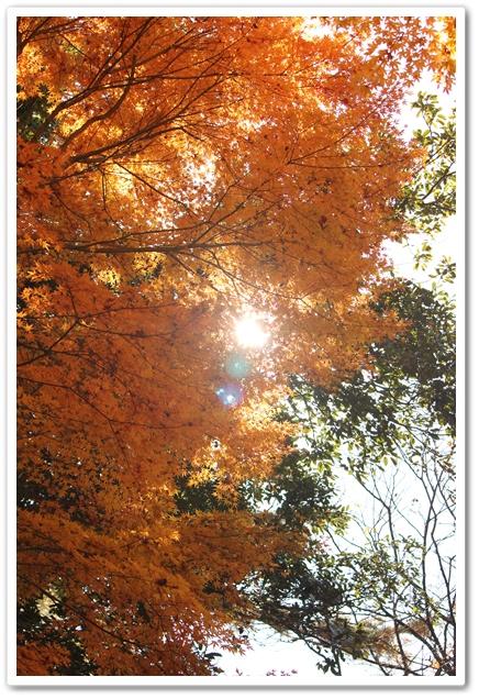 2012_11_25_2041-1.jpg
