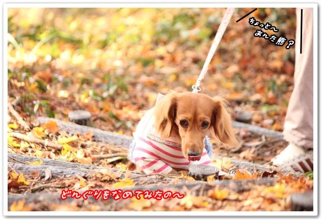 2012_11_25_2083-1.jpg