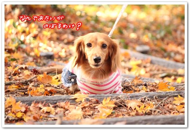 2012_11_25_2085-1.jpg