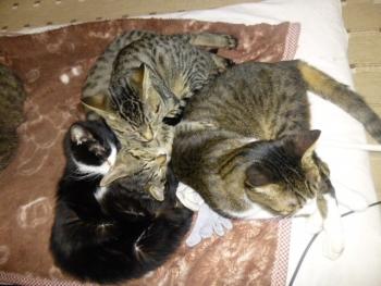 猫集まる(小)