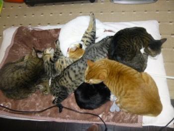 猫集まる(大)