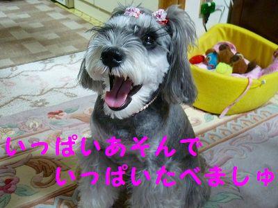 P1140088_20130102190647.jpg