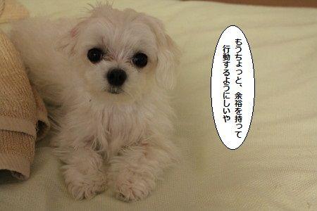 IMG_0351_1wakaku200ss8008k
