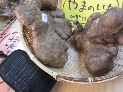 IMG_0078_1yamanoimoo120020889.jpg