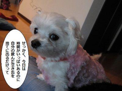 IMG_0263_1sekkakukyouno200188l5678.jpg