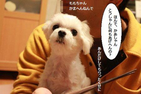 IMG_4073_1tenukidekite2001200589914.jpg