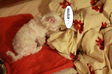 IMG_4202_1madaka00177888.jpg