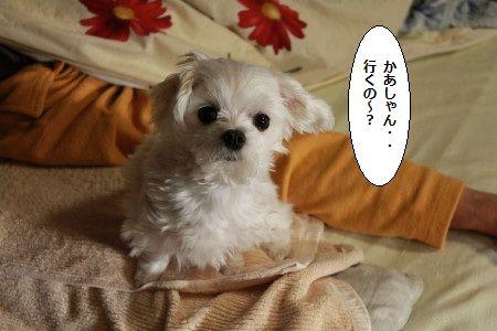 IMG_4404_1ikunooo2001300h128.jpg