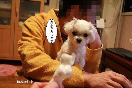 IMG_5312_1kasyakasya200133s458879.jpg