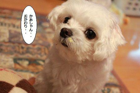 IMG_6815_1okawarii2001dd400.jpg