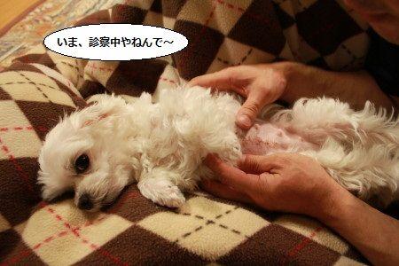 IMG_7865_1imasin20012ss401.jpg