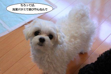 IMG_8264_1senntaku200sss1.jpg