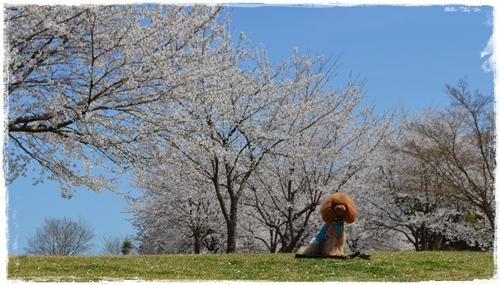 ゆずちゃん公園2
