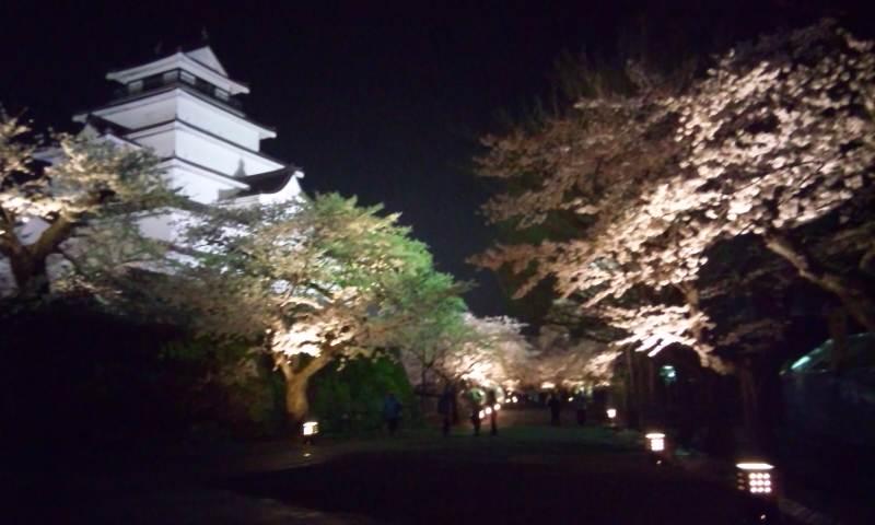 夜桜 おしろ