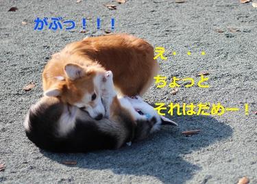 IMG_0948.jpg