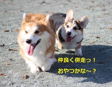 IMG_1081.jpg