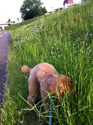 草むら散歩